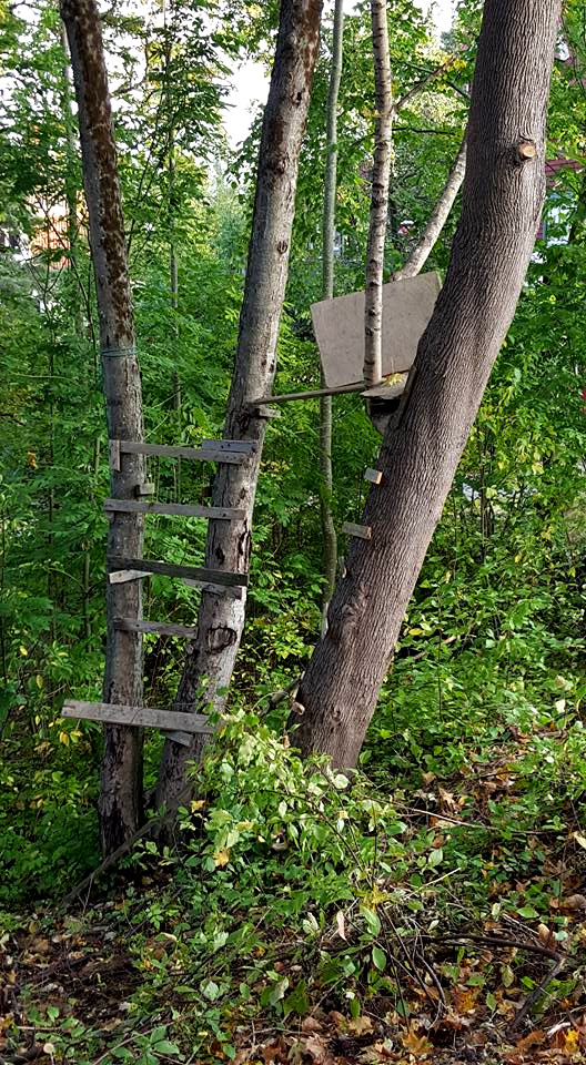 Tree house ruin on Neglingehöjden hill