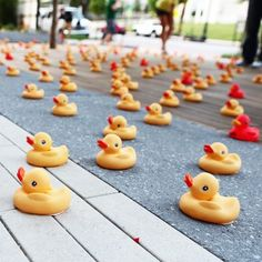 quackinvasion