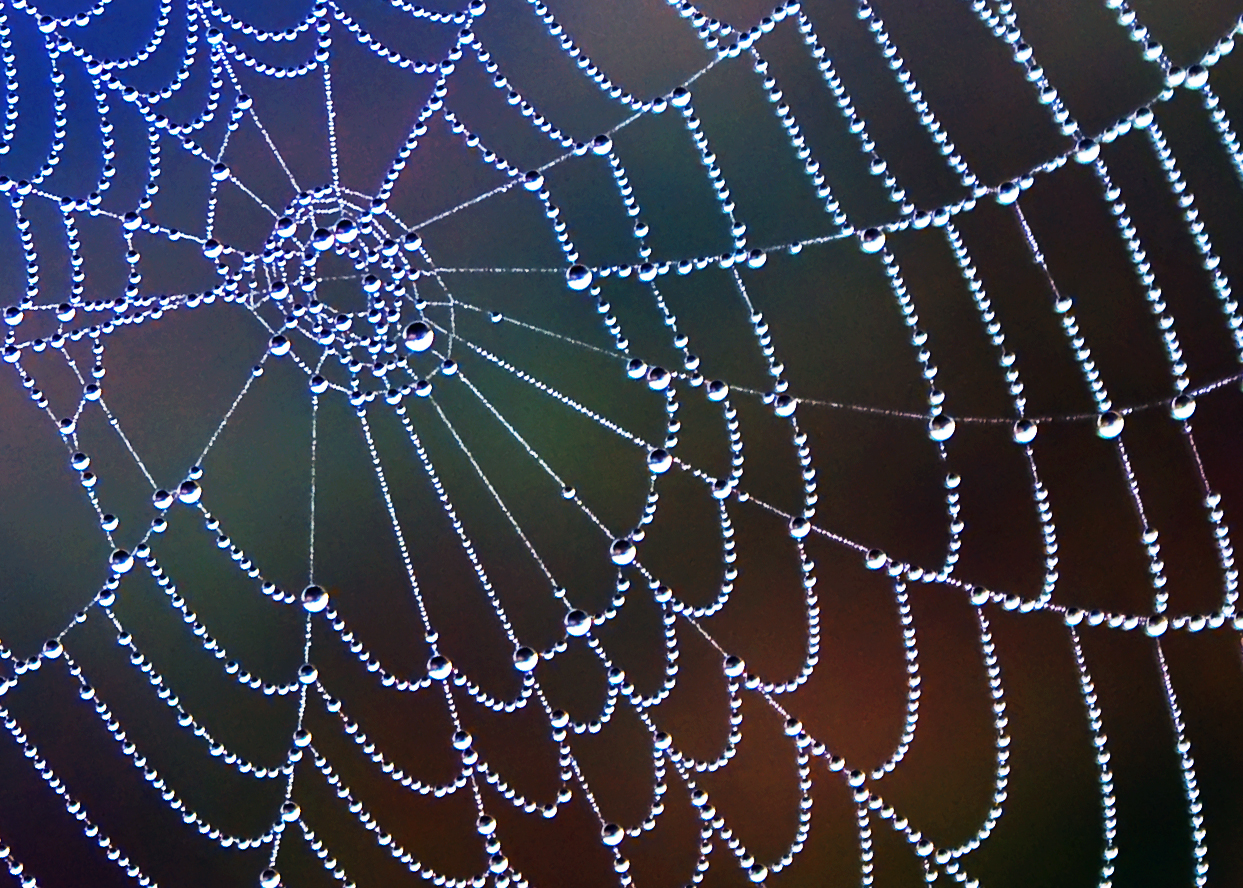 Image of wet spider web from www.photoforum.com