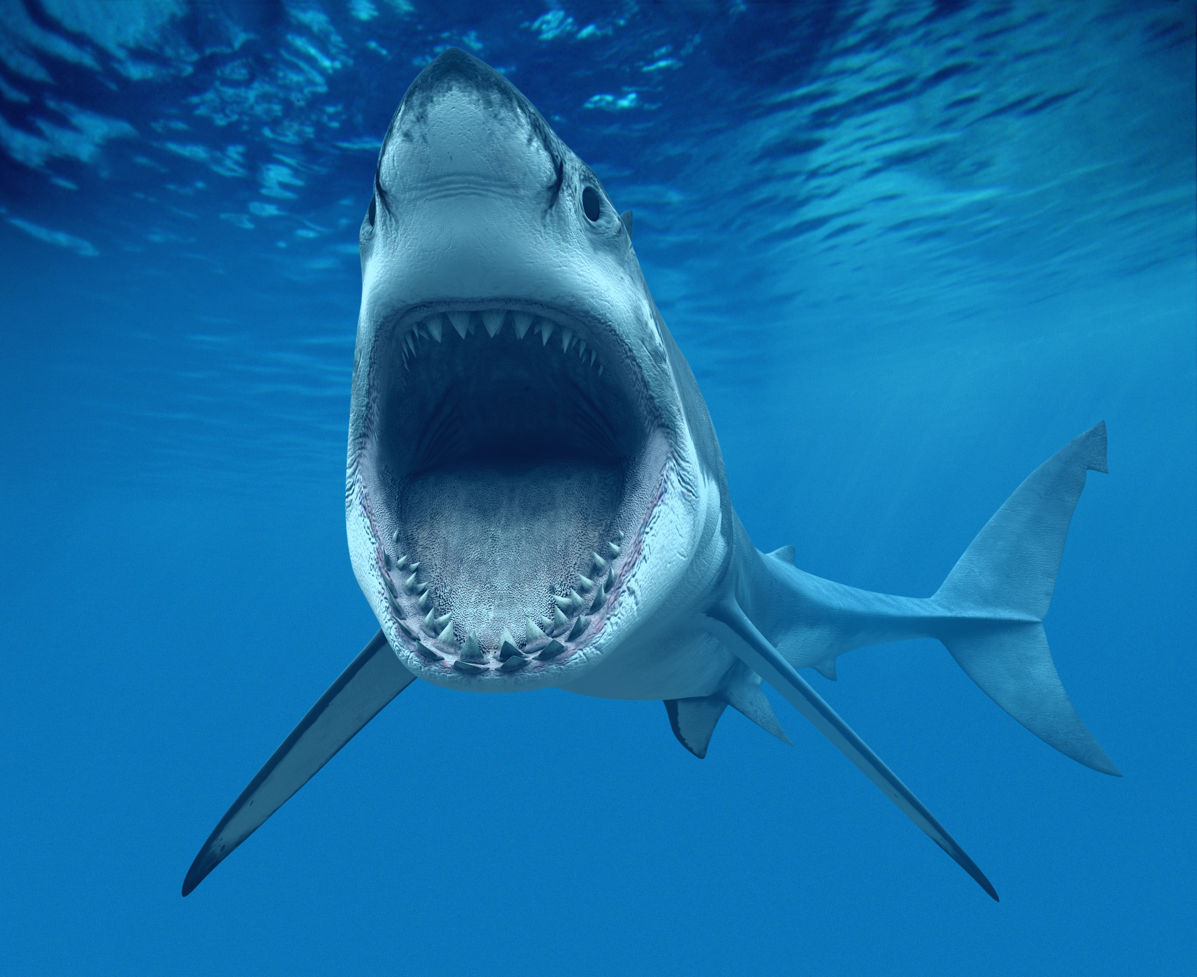 Image from www.clker.com. Woodridge, IL, USA --- Great White Shark Opening Mouth --- Image by © Denis Scott/Corbis