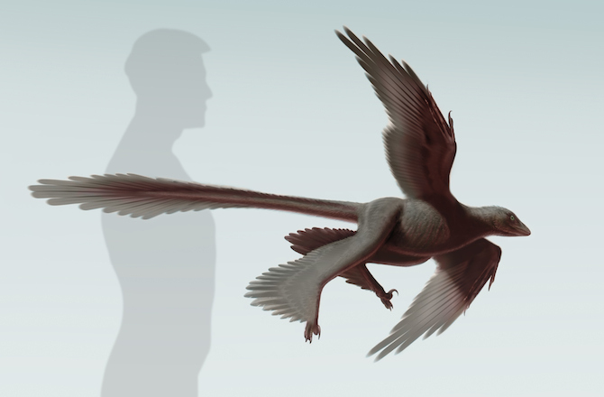 This newly discovered feathered dinosaur was built like a modern airplane.  Image from Discovery News.