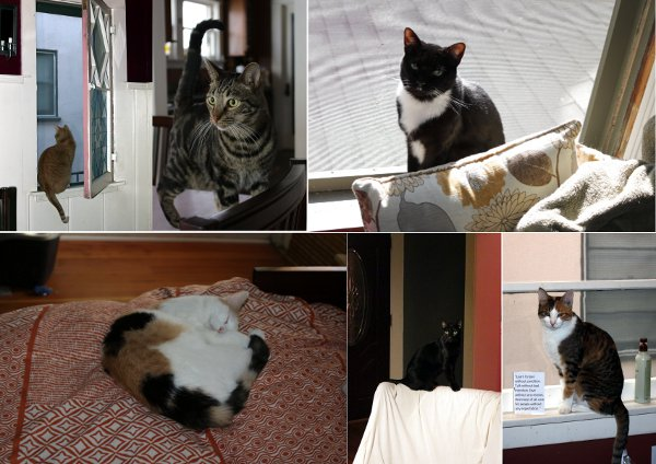 My sister's cats. Clockwise from top left: Tate, Topher, Mona, Calliope, Oberon, Molly.