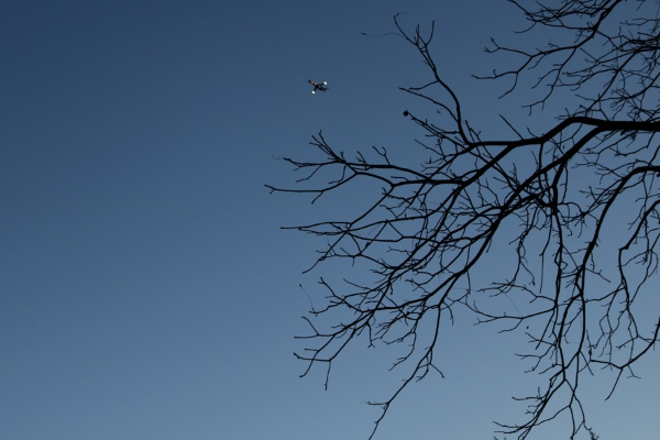 Airplane and bare tree in the early morning.