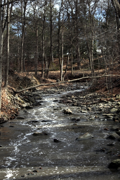 The brook on campus, swollen with snowmelt.