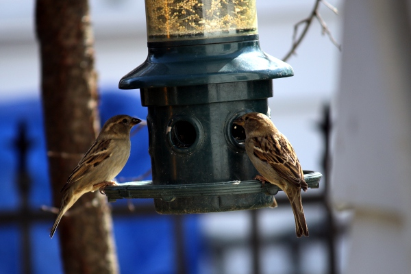 Little birds on the feeder.