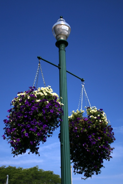 Planters hanging from a light pole in downtown Schenectady.