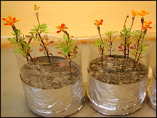 You Can Grow Certain Hardy Plants In The Soil On The Moon; Just Add Air And  Water!