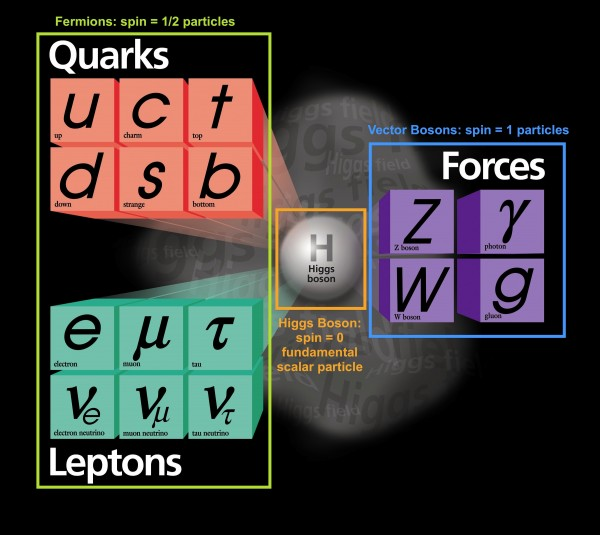 Standard model particles
