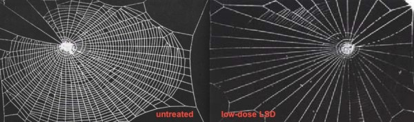 "Image credit: Rainer Foelix, in his book ""Biology of Spiders""; Dr. P.N. Witt."