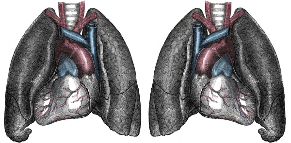 Image credit: 20th U.S. edition of Gray's Anatomy of the Human Body (1918).