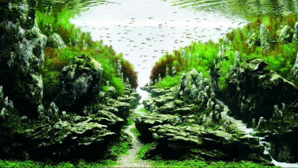 Image credit: Aqua Design Amano and the International Aquatic Plants Layout Contest.