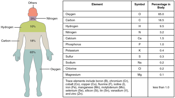 The elements in the human body. Image credit: Openstax college, Anatomy & Physiology, Connexions Web site. From http://cnx.org/content/col11496/1.6/.