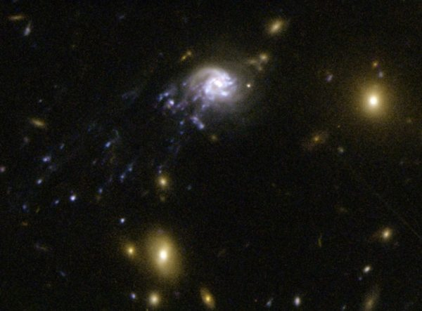 One of the fastest known galaxies in the Universe, speeding through its cluster (and being stripped of its gas) at a few percent the speed of light: thousands of km/s. Image credit: NASA, ESA, Jean-Paul Kneib (Laboratoire d'Astrophysique de Marseille) et al.