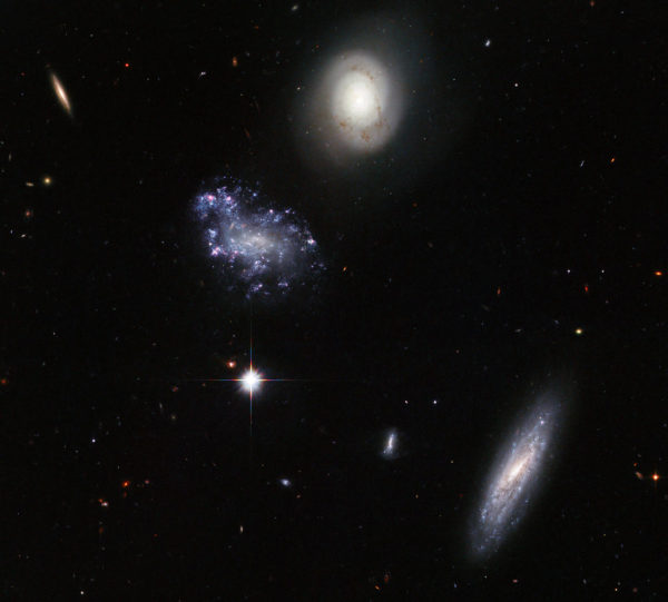 The different shapes, structures and morphologies of some of the galaxies in Hickson Compact Group 59 show evidence for a wide variety of stars, plus gas, plasma and dust as well. Image credit: ESA/Hubble and NASA.