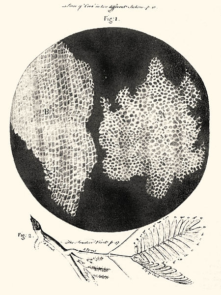 Hooke's drawing of cells in cork (source: wikipedia)